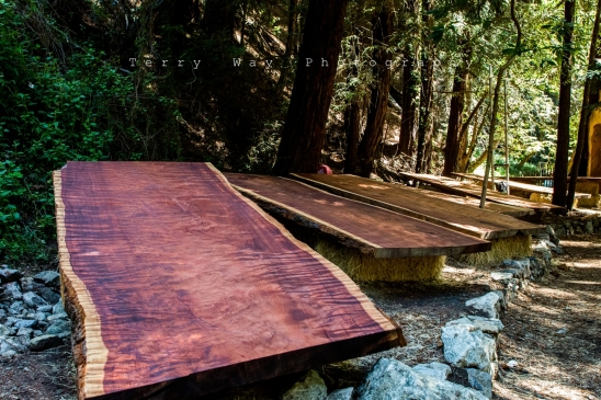 Redwood_009