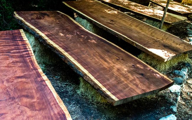 Redwood-13650