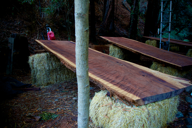 redwood27650