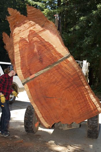 redwood9-2-3-350